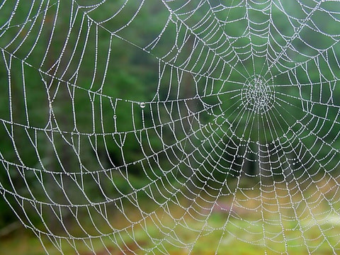 *** Слово тенета тенет net web ***