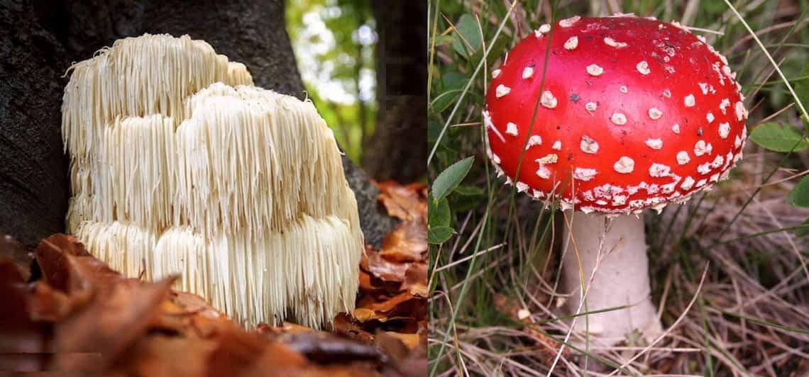 *** Кто такие грибы - Нужно можно есть грибы - Чем плохо есть грибы - Антон Кузнецов видео mushrooms ***
