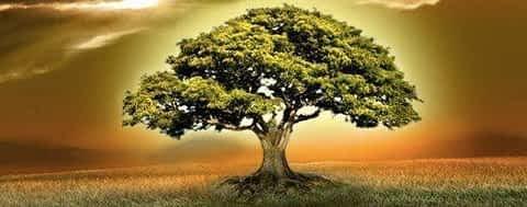 *** Знания Тантра-Джйотиша – Сила Сознания/Осознанности, Разум, Знания, Мудрость, Разумность ***