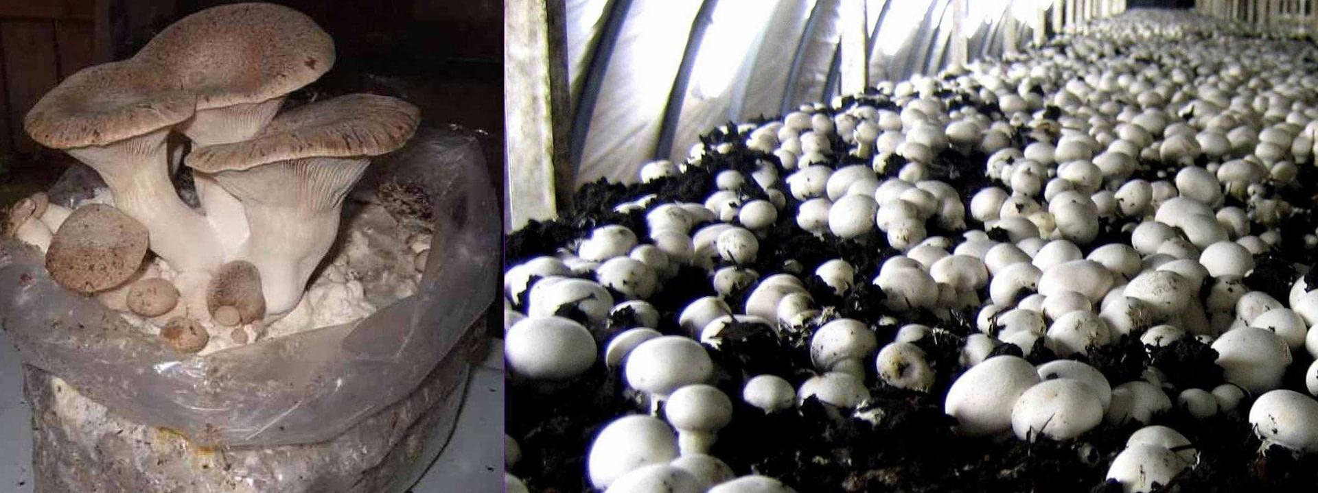 *** Кто такие грибы - можно ли есть грибы -если нет чем плохо есть грибы - видео - mushrooms ***